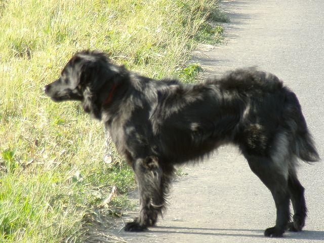 Kroatischer Sch 228 Ferhund Mischling Jenny Leben Mit Hund