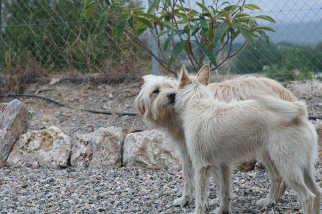 Hunde6